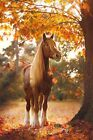 autumn photography and awesome Horse Photo print canvas choose your size