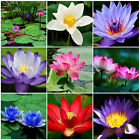 10Pcs Fresh Water Lily Lotus Flower Bowl Pond Bonsai Seeds Perfume Blue Lotus