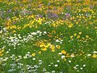 Bats in the Garden Wildflower Seed Conservation 80/20 Mix by John Chambers