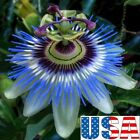 USA SELLER Blue Passion Flower 5-20 seeds HEIRLOOM NON-GMO