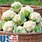 USA SELLER Snowball Improved Cauliflower 200-3000 HEIRLOOM NON GMO