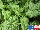 USA SELLER Bloomsdale Spinach 150-1000 seeds HEIRLOOM NON-GMO