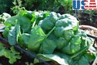 USA SELLER Giant Noble Spinach 50-400 seeds HEIRLOOM NON-GMO