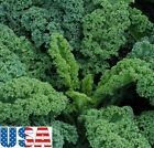 USA SELLER Dwarf Siberian Kale seeds HEIRLOOM NON GMO