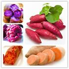 20Pcs/Bag Sweet Potato Vegetables Seeds Fresh Food Fruit And Vegetable Garden Su