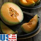 USA SELLER Delicious 51 Cantaloupe 25-200 seeds HEIRLOOM NON GMO