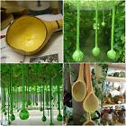 USA SELLER Long Handled Dipper Gourd seeds HEIRLOOM NON GMO