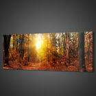 SUNRAYS GOLDEN FOREST PANORAMIC CANVAS PRINT PICTURE WALL ART VARIETY OF SIZES