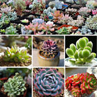100PCS Garden Potted Plants Succulents Seeds Rare Flower Bonsai Decor Home