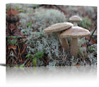 Brown Mushrooms Growing Nature Art Print Wall Decor - Canvas Stretched Framed