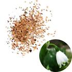 New Adorable Flower Fragrant Seeds Blooms Lily of the Valley Seeds ETDS