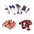 Внешний вид - 4g/Bag Natural Real Flower Dried Flowers for Art Craft DIY Candle Ornament