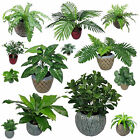 Leaf REALISTIC Small Artificial Plants 25-55cm - Palm, Fern, Bush, Taro, Yukk...