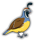 California Valley Quail Bird Car Bumper Sticker Decal  -   9'', 12'', or 14''
