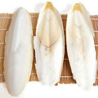 1 10PCS Cuttle Fish Cuttlefish Bone For Pet Budgie Birds Reptiles Tortoise Food