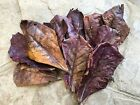 10/20/50pcs NATURAL Catappa Indian Almond Leaves for shrimp betta discus cichlid
