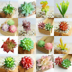 Mini Artificial Succulents Plant Fake Cactus Diy Home Garden Floral Decoration