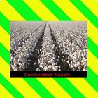Cotton Seeds 4774 - (1 Lb) for $27.99  Free Ship  ~Other Quantities In My Store~