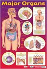 New Find Your Way Around the Human Body! Major Organs of The Body Mini Poster