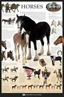 New Horses Dorling Kindersley Maxi Poster