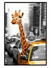 New Gloss Black Framed Giraffe In New York Safari Poster