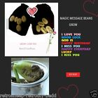 MAGIC MESSAGE BEANS NOVELTY FUN GIFT  LOVE YOU  GOOD LUCK  BIRTHDAY  GOD SMILE