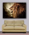 "LION  Huge canvas print, 30"" x 40"""