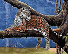 Jaguar On Tree Needlepoint Canvas H118