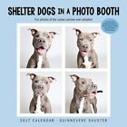 Shelter Dogs In A Photo Booth 2017 Square Calendar 30x30cm