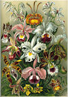 Ernst Haeckel Art Forms in Nature New Repro Print/Poster #7 Giclee Archival Ink