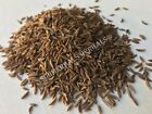Caraway Seed, Carum carvi (Whole Berries) ~ Sacred Herbs from Schmerbals Herbals