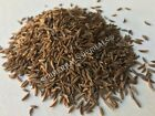 Caraway Seed, Carum carvi, Whole Berries ~ Sacred Herbs from Schmerbals Herbals