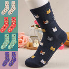 Women Men Autumn Spring Cute Cartoon Cat Socks Stockings Many Cats Funny Cotton