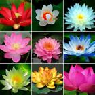 10 seeds 13 color mix Bowl Lotus Flower Seed water Aquatic Plants Nelumbo PG5E