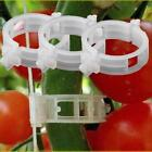 US Garden Plant Support Clips Trellis for Vine Vegetable Tomato to Grow Upright