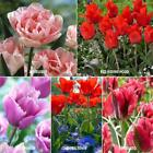 Royal Horticultural Society's Award Of Garden Merit Tulip Collection Flower Seed
