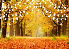 10x8ft Autumn Forest Trees Fall Leaves Lights Photo Background Vinyl Backdrop LB