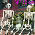 150cm Poseable Human Skeleton Halloween Decoration Party Prop US
