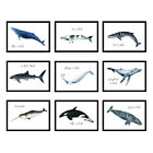 Boys Girls Bedroom Living Room Animal Whale Prints Wall Art Posters - UNFRAMED