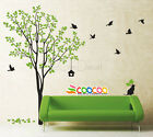 """Wall Decor Decal Sticker Removable tree branche birds large 2 colors DC02232 72"""""""