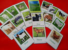 ANIMALS - flash cards - Various sets to choose from -EYFS -first learning /class