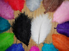 Wholesale Natural OSTRICH FEATHERS 6-8'inch 14 kinds Color Selection-u90