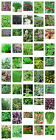 Herb Seeds - Superb Selection of 50 plus Herbs Suitable for Most Gardens