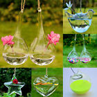 Hanging Round Egg Glass Flower Vase Hydroponic Container Creative Wedding Home