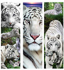 WHITE TIGER BOOKMARK / 2016 CALENDAR Jungle Animal Cub Print ART Cat MINI Poster