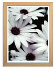 Flower White Daisy Epson Print in Ikea, A3 Clipframe or print only