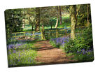 stunning bluebell picture scenic canvas print photo photograph picture