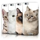 Printed Case for iPhone 6+/Plus 5.5 /Cat Breeds Collection