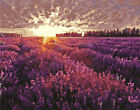 Sunset Beautiful Lavender Field Landscape Needlepoint Canvas 588