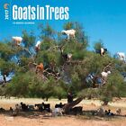 Goats In Trees 2017 Square Calendar 30x30cm